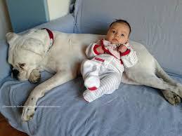cane cura bimbo che dorme