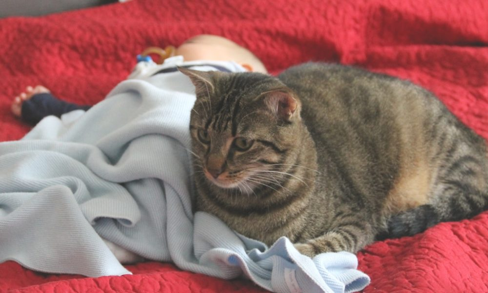 gato che cura il neonato