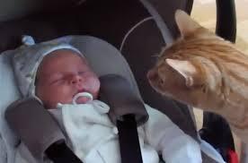 gato che cura il neonato3
