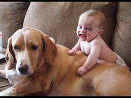 bibmo gioca col cane