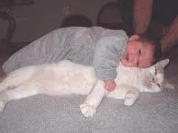 bimbo gioca col gatto2