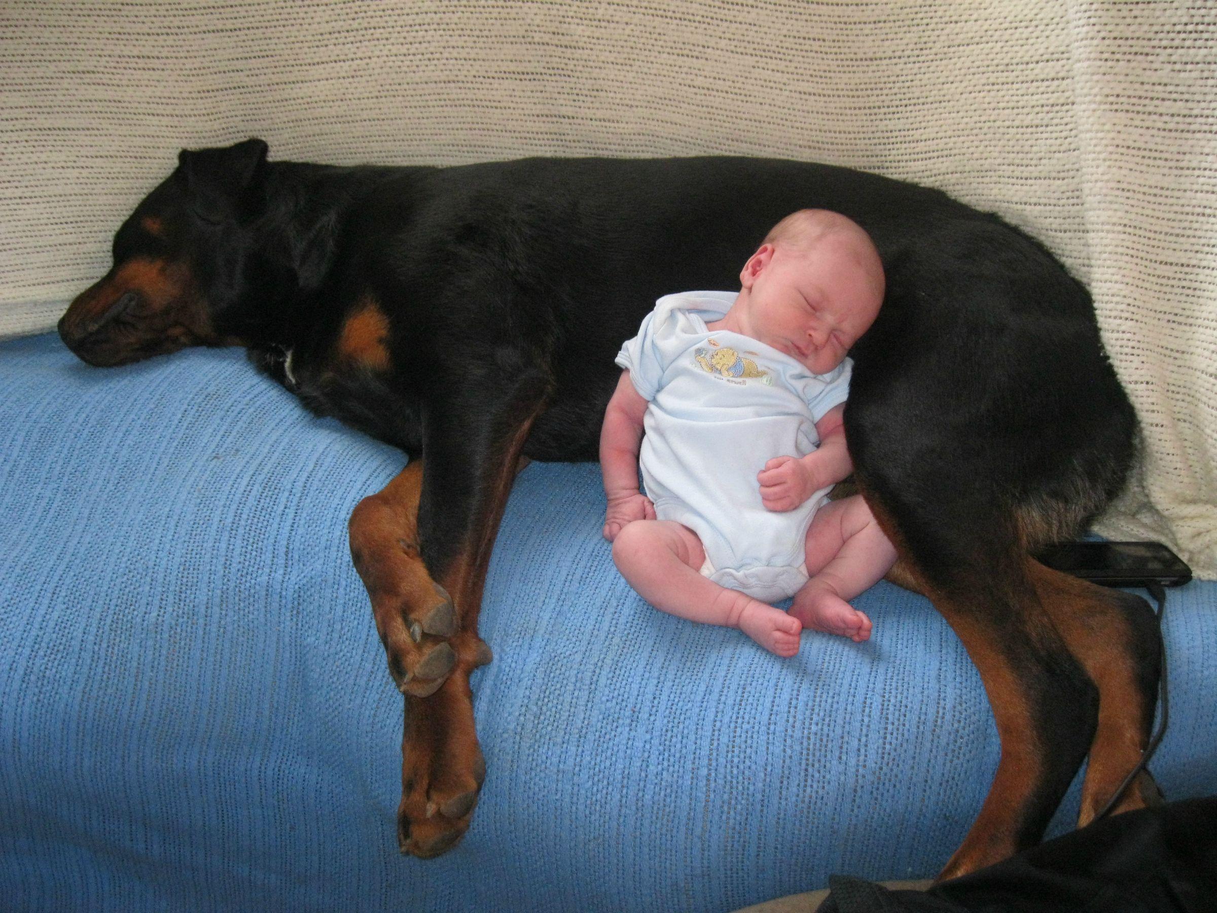 Neonati e animali domestici