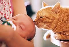 gato che cura il neonato2
