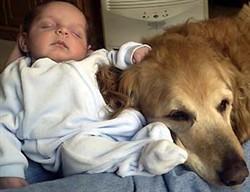 labrador cura bimbo che dorme