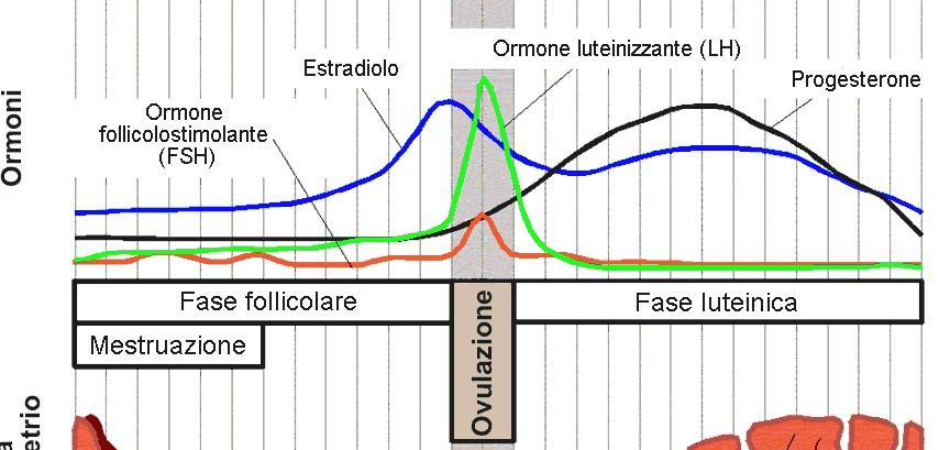 Conoscere il ciclo ovulatorio per scoprire la nostra fertilità